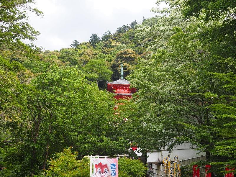 岐阜公園 新緑(2)