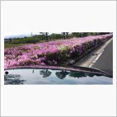 愛車と春の花