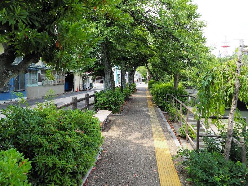 聲の形 舞台探訪 美登鯉橋北の街路樹