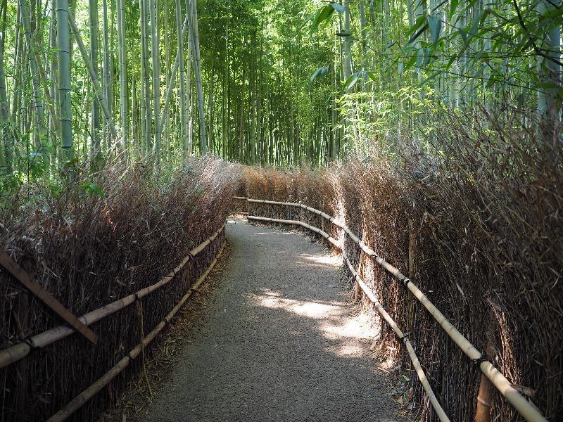 嵐山 竹林の小径(1)