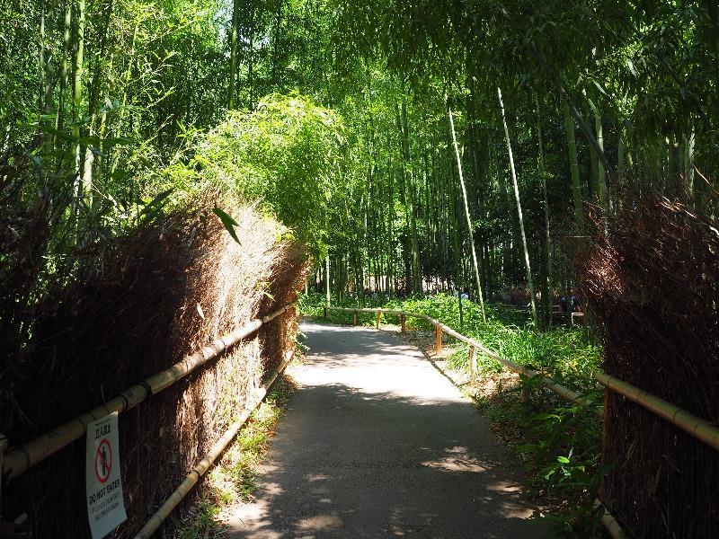 嵐山 竹林の小径(2)