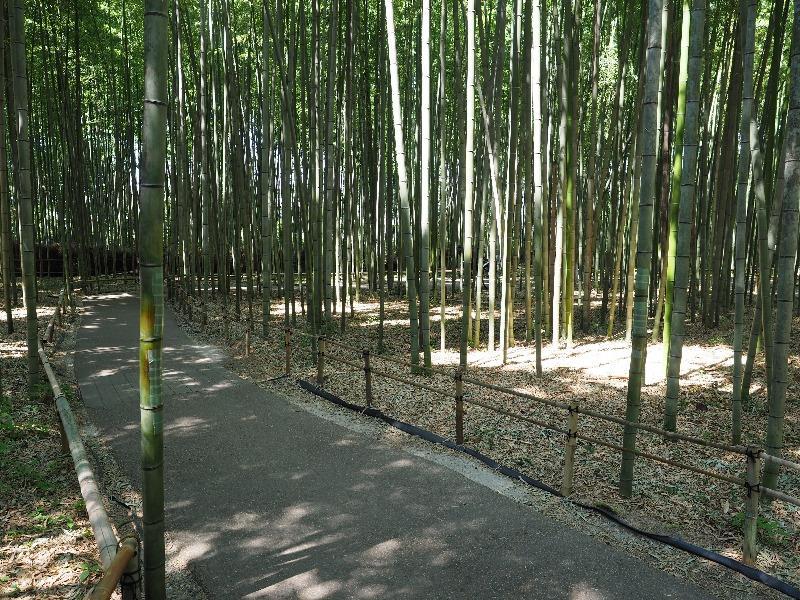 嵐山 竹林の小径(3)