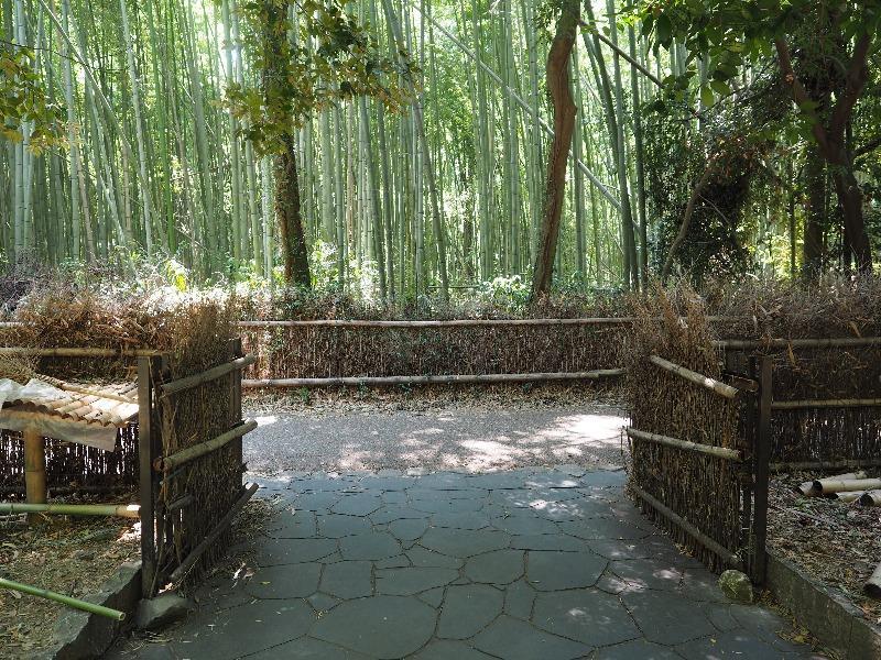 嵐山 竹林の小径(5)