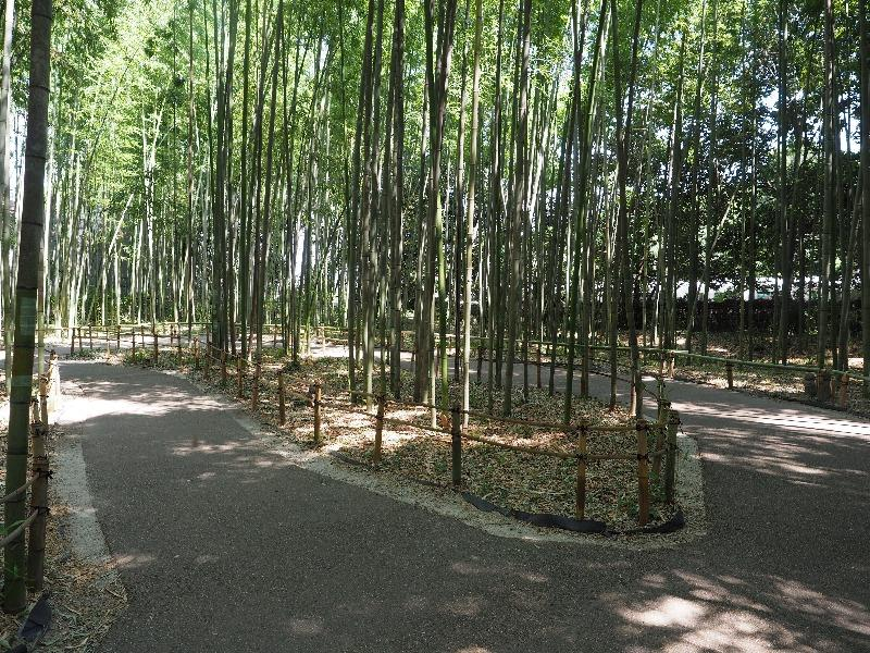 嵐山 竹林の小径(4)