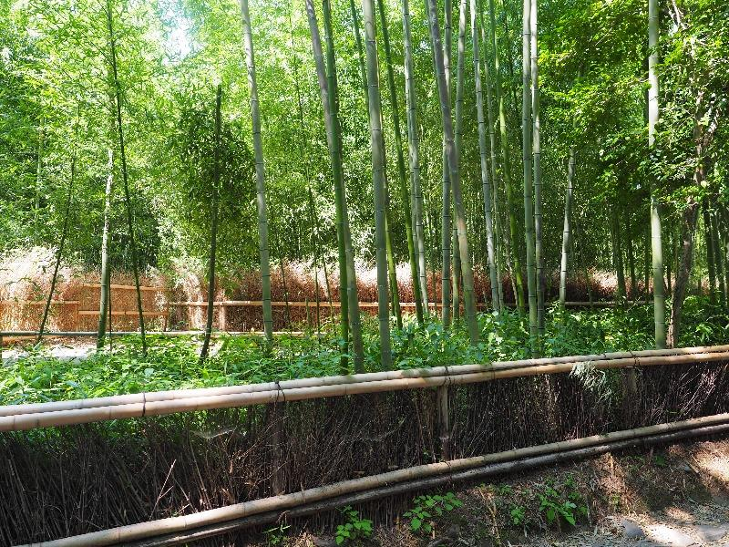 嵐山 竹林の小径(6)