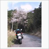 2002年3月 桜ツーリング