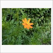 庭の花シリーズの画像
