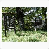 飯野堰堤公園~杉沢の大杉の画像