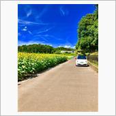 ひまわり畑とチンクエチェントの画像