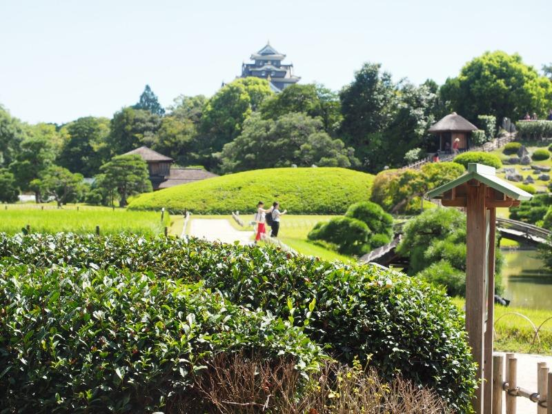 岡山後楽園 茶畑【+岡山城】