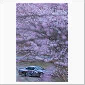 サクラノ詩~春の雪~