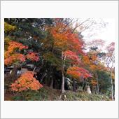 但馬・安國禅寺と出石城跡の紅葉の画像