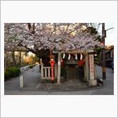 2019.04.13桜 祇園白川 カタナ編