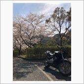 """""""ホンダ ホーネット250""""の愛車アルバム"""
