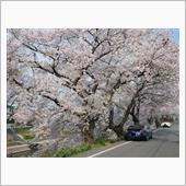 2020/4/4~京都桜撮影オフ & 壷阪寺