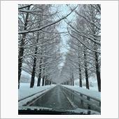 大雪のメタセコイヤ