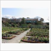 20121.3.14  ローポリでモネの庭へ(^_-)-☆
