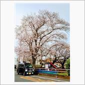 通勤途中 de お花見🌸♪Ю―(^▽^o) ♪