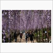 曼荼羅寺公園