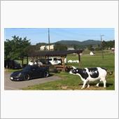 牧場まで仔羊に会いに🚗の画像