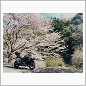 """""""カワサキ Ninja1000""""の愛車アルバム"""