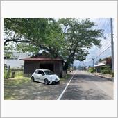 古の桜樹とのツーショットの画像