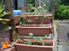 家庭菜園?