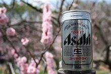 2009年5月10日北海道は梅と桜が同時期に咲きます。