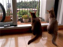 ガーデンを眺める愛猫たち