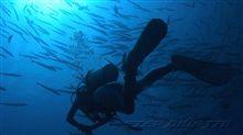 Palau ブルーコーナー バラクーダの群れ