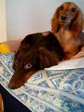 我が家の愛犬も、見てやって
