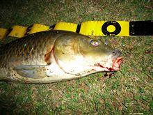 『チチカカ湖でコイ釣り・・・コ式』