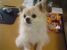 めんこい犬ッコロ(*^o^*)