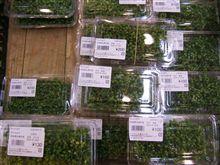 山椒の実を購入