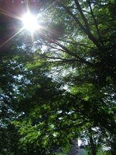 木陰を探して・・・・