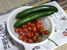 今朝の収穫(^-^)b