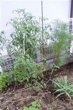 勝手に菜園。