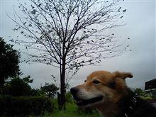 夏の嵐…in千葉(゜д゜;)
