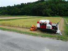 稲刈りとインターネット。