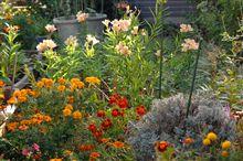 ☆朝庭の花♪