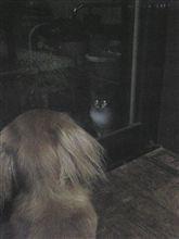 家に入りたい猫vs外に出たい犬。