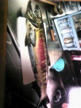 鮭の写真の写真