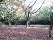 今朝は峰山公園