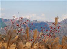 奈良県南部紅葉ドライブ