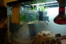 食虫植物を亀の温室に冬籠りさせました。