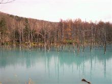 美瑛「青い池」に柵ができたらしい