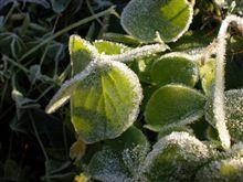 霜キーーーーターーーーー!!おはようござりす。