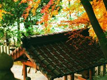 高山の紅葉