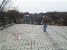 お散歩o(^-^)o