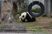 パンダに会いに♪